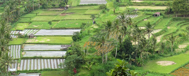 Da Yogyakarta a Bali, tour5 giorni - 4 notti