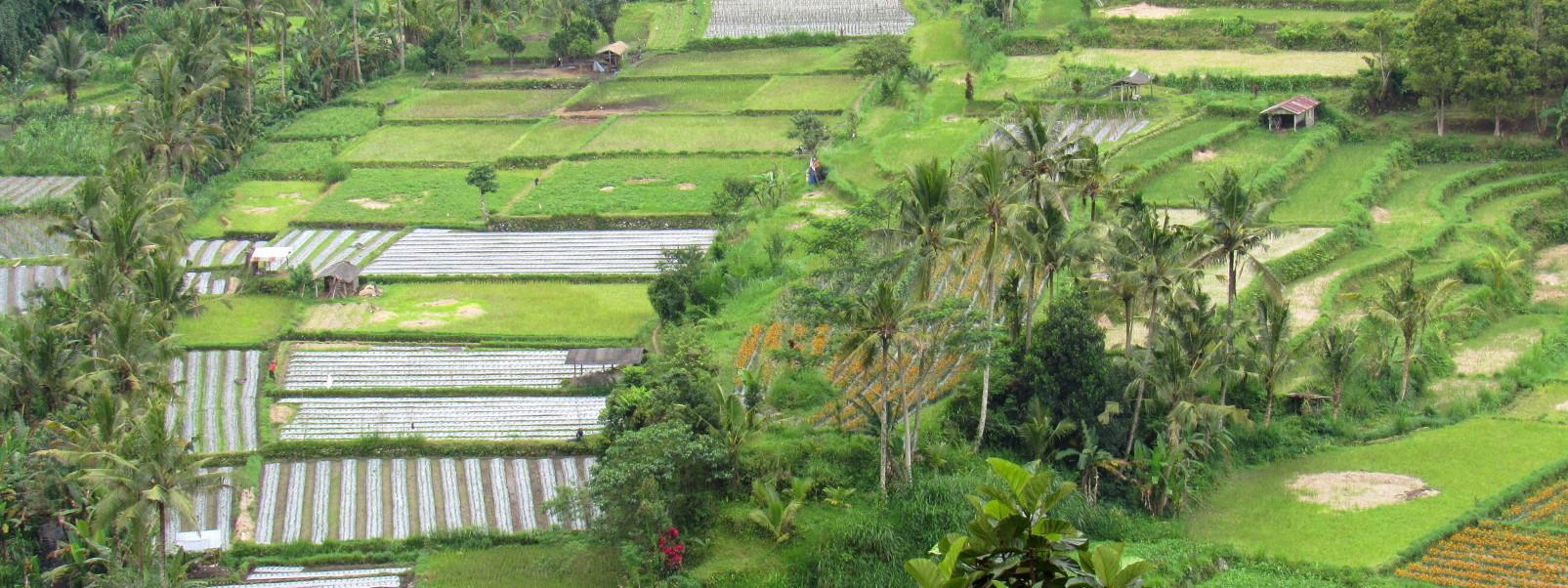 Bali Panorama II