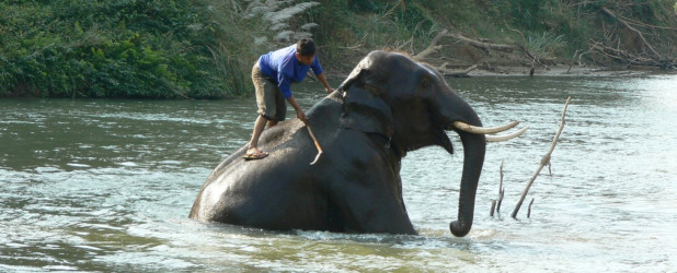 Trekking in elefante safari