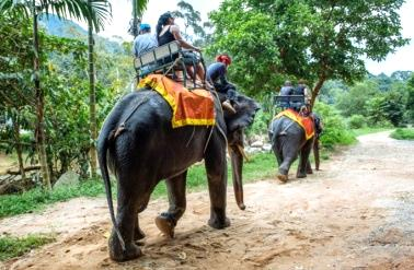 Rafting, trekking, quad ed elefanti a Khao Lak
