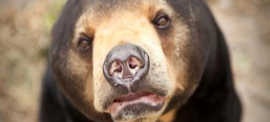Il centro di recupero degli orsi