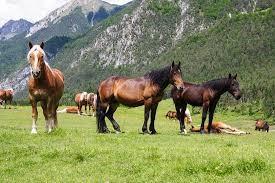 In cavallo nell'High Country australiano
